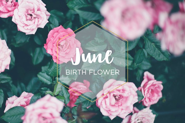 June Birth Flower